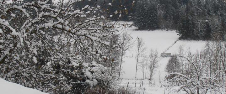Brrrr… on se gèle les plumes !!